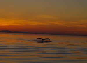 best hump sunset 1