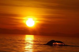 best hump sunset 2