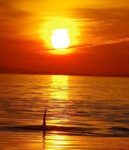 best killer sunset 2