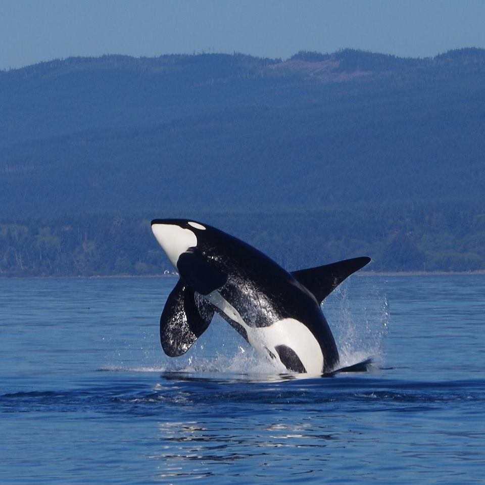 Best Whale Watching Tour Vancouver